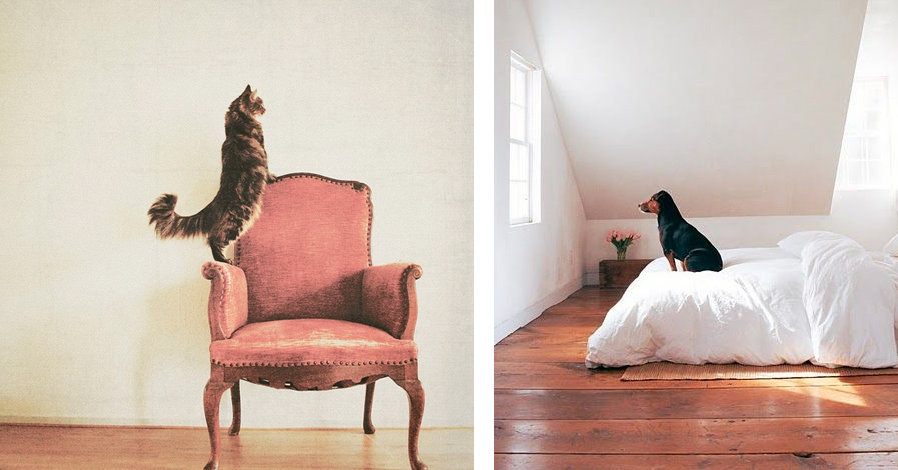 cane e gatto - home idee per decorare
