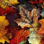 autunno arredo decor home tuttoferramenta