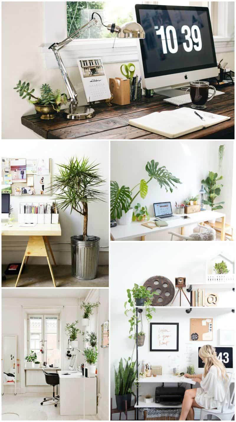 piante in ufficio green life idee arredi con piante decorative
