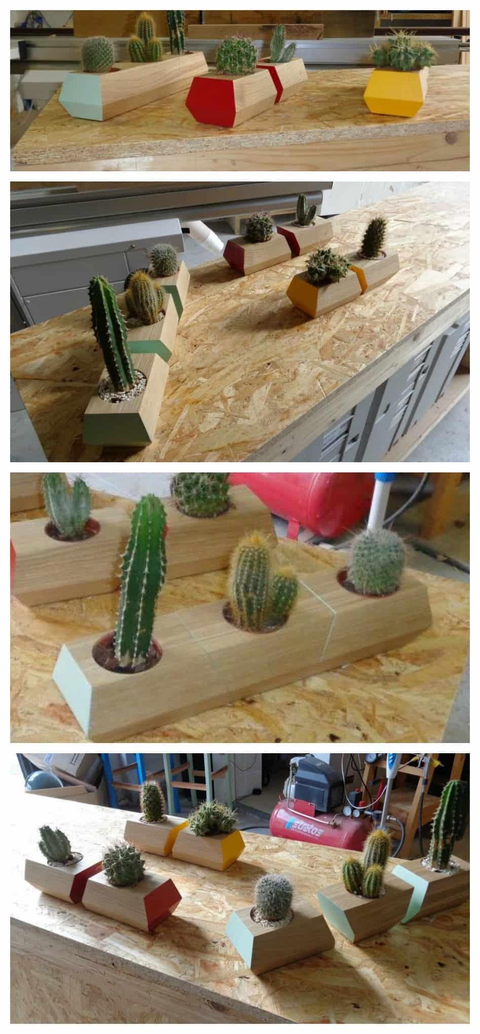 cactus vasetti fai fa te in legno di pallet moderni e di design composizione colorata piantine