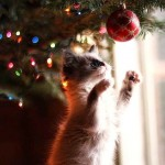 cat-christmas-tree-albero-di-natale-a-prova-dii-gatto