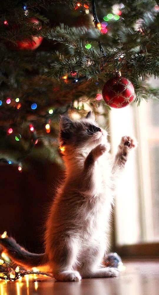 5 Idee per un Albero di Natale a prova di gatto!