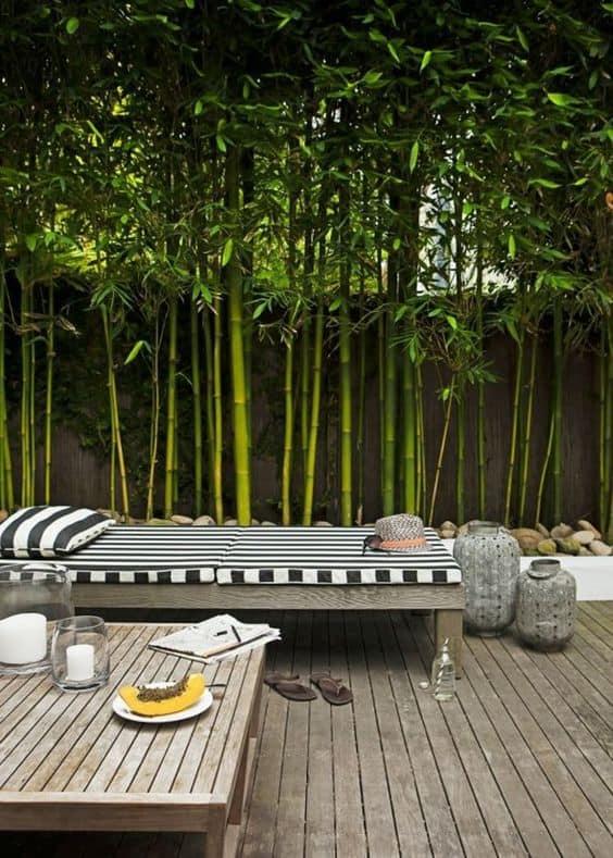 siepe di bamboo per terrazzo
